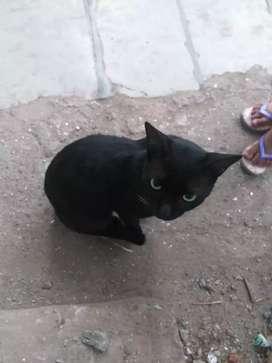 Catselling