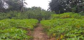 Jual tanah cepat di SP 3 Kabupaten Sorong