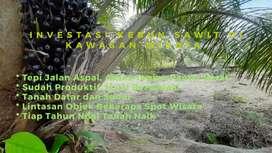 Dijual Kebun Sawit Siap Panen di Sumatera Utara