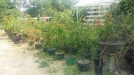 Kerjasama kebun bunga dan buah