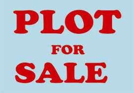 Plot 25×90 = 250 gj. Officer Colony, Block-C, Mangwal road, Sangrur