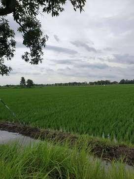 Dijual Tanah Mojoanyar Pasinan Jabon Mojokerto SHM Luas 1715 m2