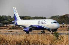 indigo airlines urgent hiring for freshers apply now  for any update r