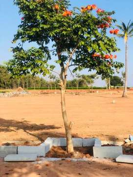 Residential plots available at jungamakotte As..