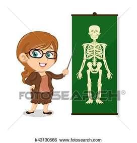 Anatomy classes