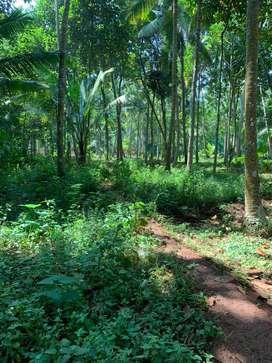 Plots for sale near chavadi jn (Kanjiramkulam)