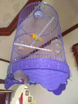 Love bird gacor