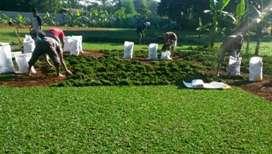 tukang taman jual rumput trima jasa pembuatan Kolam dll