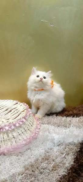 Cute Kittens are available