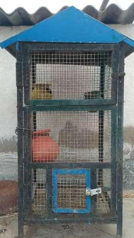 Love birds nest