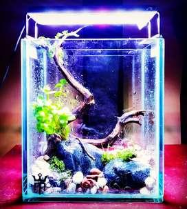 Aquarium aquascape soliter ikan cupang guppy
