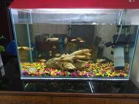 Fish tank and draft wood