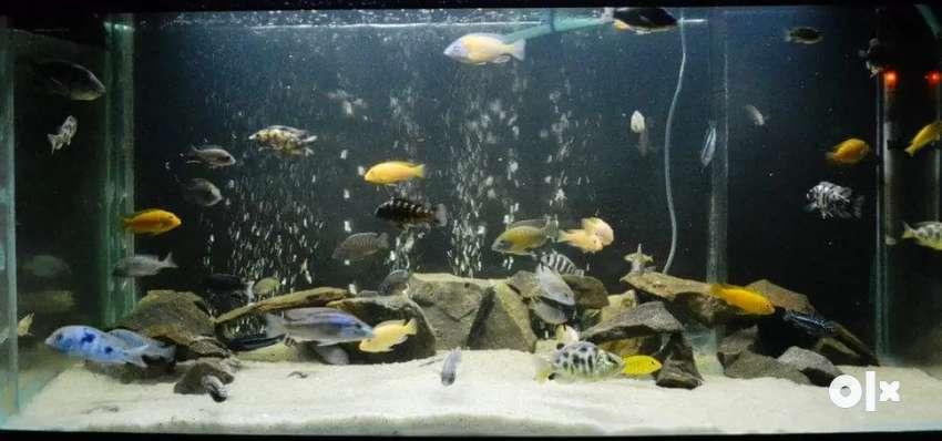 Fish Aquarium for sale in Fridabad