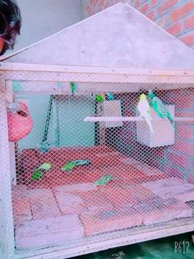 20 pieces of Australian parrots with a larger size wooden cage