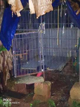 Dog cage used 4feet x 4 feet