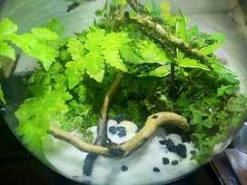 Mini bowl terrarium replica of nature