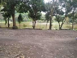 Dijual Tanah Kebun Jati Di Desa Cikalahang Telaga Remis Cirebon