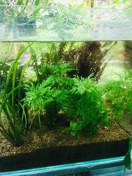 Aquarium plants for sale