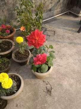 Rent Available in Saratnagar, Shivmandir, Contact : 8zero16422272