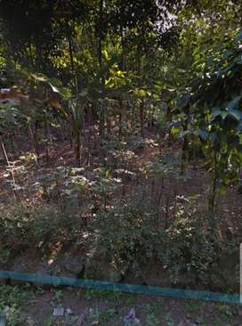 Tanah Murah Strategis 300 m2 Pandansari Ajibarang