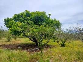 Dijual Tanah  di daerah Kabupaten deli serdang