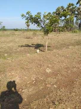 Fast thinking of buying plots at kanchikacherla