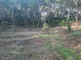 3 acre farm  land near Mananthavady
