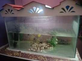 Fish aquarium and Flowerhon fish