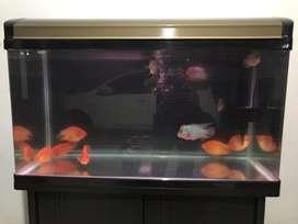 Aquarium Pabrikan Ace Hardware