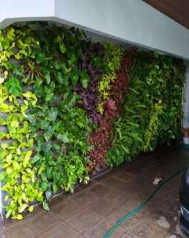 Terima jasa pembuatan taman vertikal garden