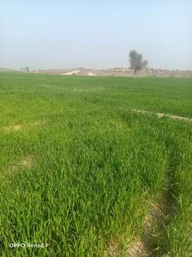 160 KANAL ARMY ALLOTED AGRI LAND NEAR CHWOK SERWAR SHAHEED