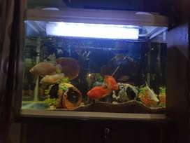2.5 feet fish aquriam new condition with all hard fish
