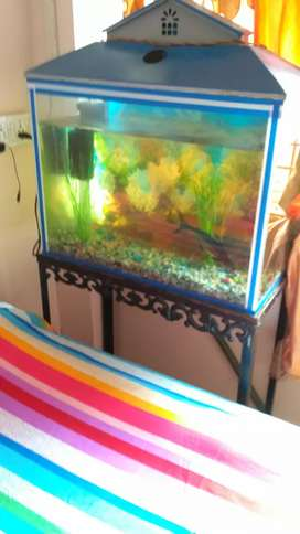 Big aquarium with gold fish and shark