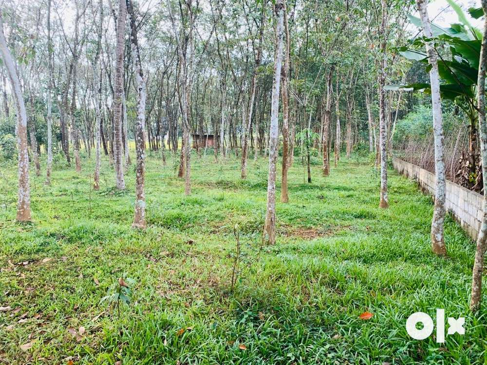 plot for sale-konni_ vakayar -govt teak wood depo road