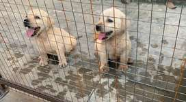 LAB peps available