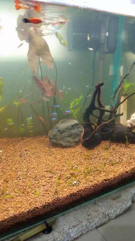 Planted aquarium for sale with fishes