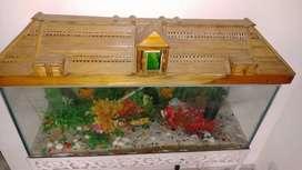 Aquarium without fish
