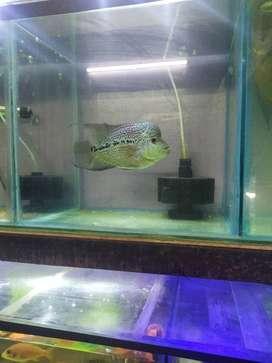 Bubbles fish zone