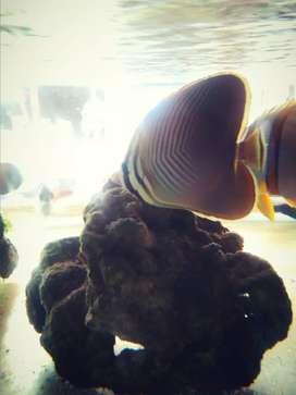 Aquarium ikan hias laut