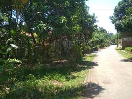 Tanah Pekarangan Murah, Wiradesa, Pekalongan