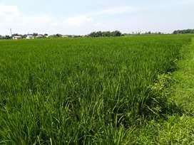 Tanah dijual di desa kolam