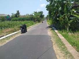 Tanah murah di barat kelurahan pandowoharjo sleman