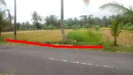 Tanah, Hijau, Sejuk, View Merapi, Pakem , Sleman, Yogyakarta