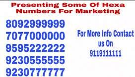 Premium vanity numbers