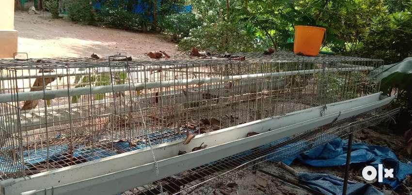 Hen cage 50 0