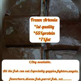 Frozen Artemia 1st quality,65%protein, 7%fat,