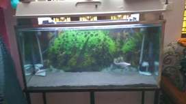4 feet x 2 feet height aquarium
