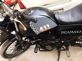 modified himalayan