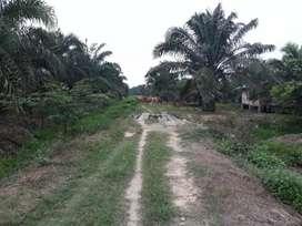 Kebun sawit-Mulyono, 8 Ha, Lirik, Inhu,Produktif
