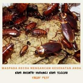 Jasa Fogging nyamuk kecoa serangga dan basmi rayap Pelayanan Terbaik